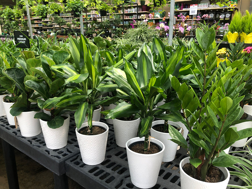 long display of houseplants in a garden center greenhouse
