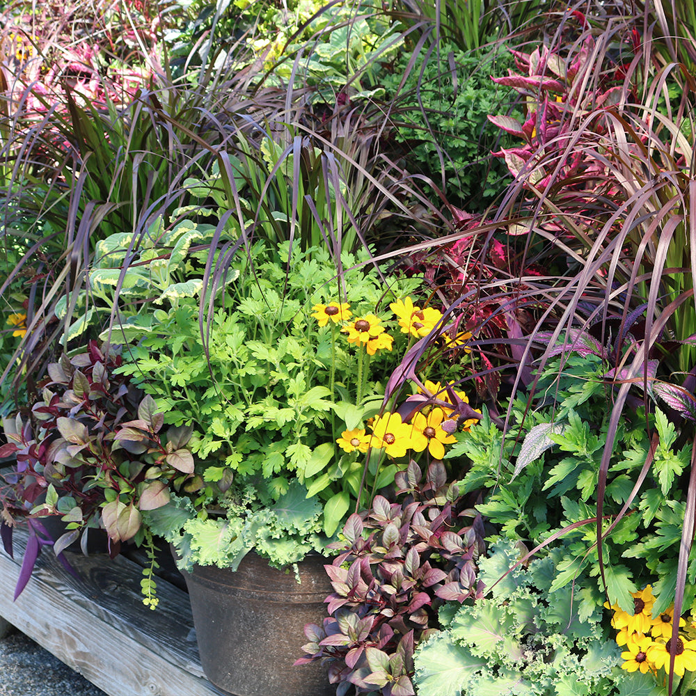 display of fall combination planters at garden center