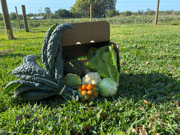 Veggie Box Certified Organic Produce Subscription Charged $35 A WEEK FOR 30 WEEKS PICKUP ONLY AT ONE OF OUR STORES Starting November 11 2020