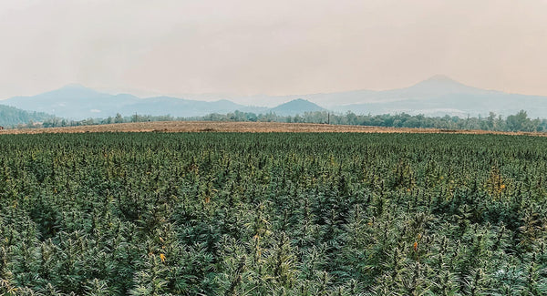 Southern Oregon Hemp Farm