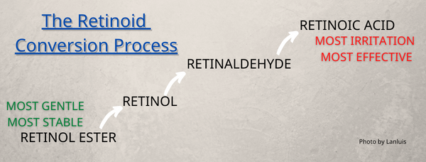 The Retinoid Conversion Process