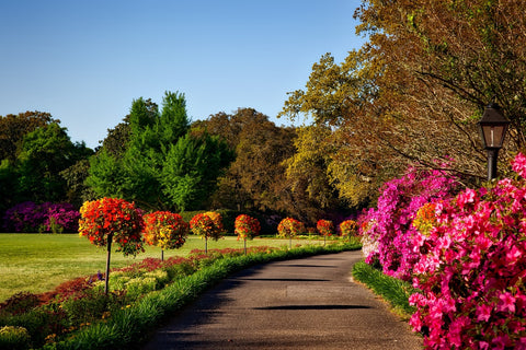 walkways with colorful flowers