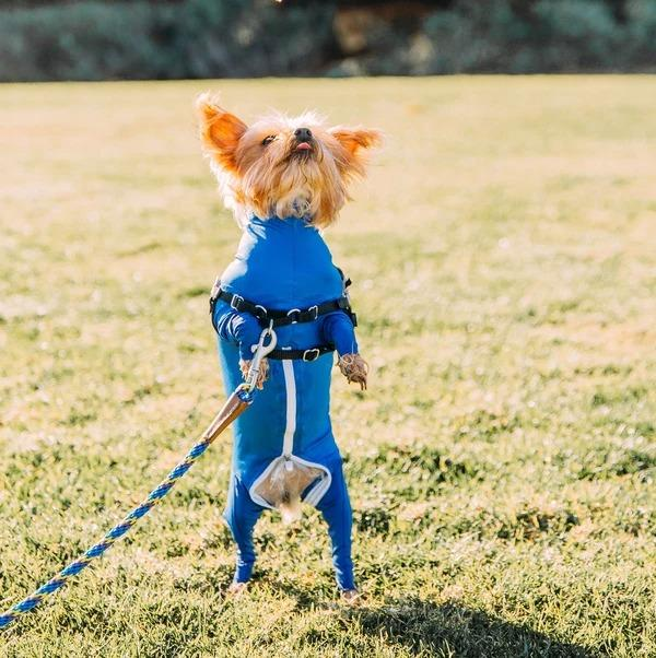(Black Friday Sale!🔥) Four-Legged Stretch Suit For Dogs