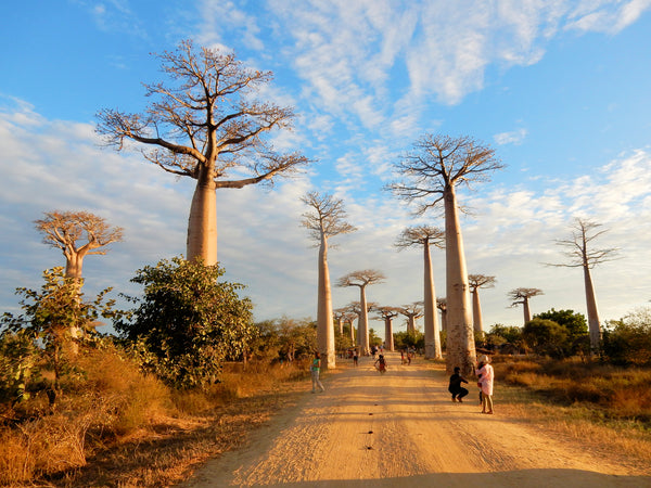 The benefits of baobab oil for your skin
