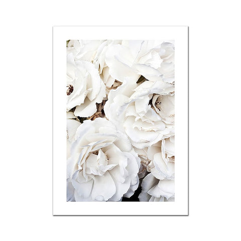 White Roses Poster Canvas 3