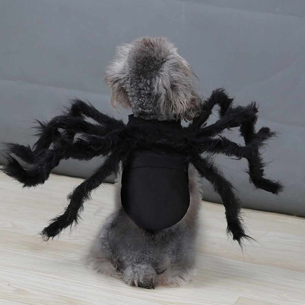 Spider Pet Halloween Costume