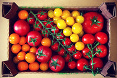 Tomato Selection, 1.5KG