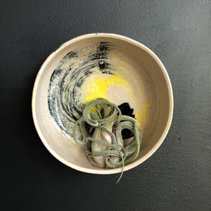 Air Plant Wall Holder - Black Yellow Wave