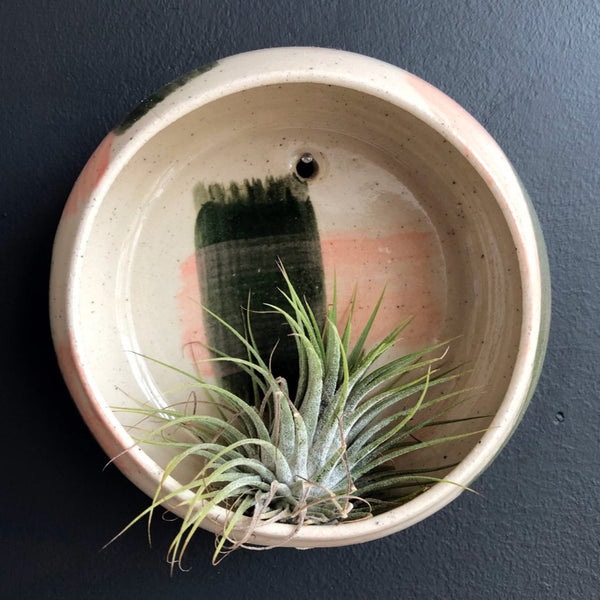 Air Plant Wall Holder - pink and green