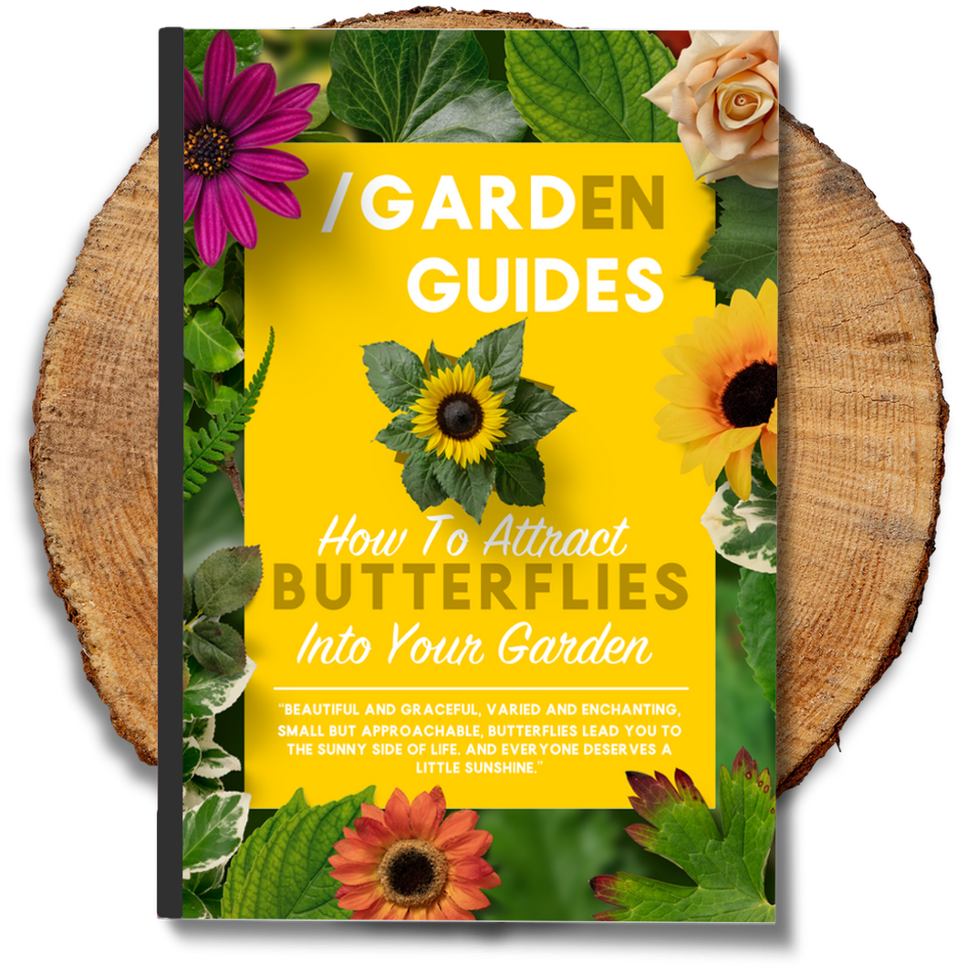 How To Attract Butterflies Into Your Garden