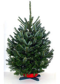 Table Top - Farm Fresh Fraser Fir Christmas Tree