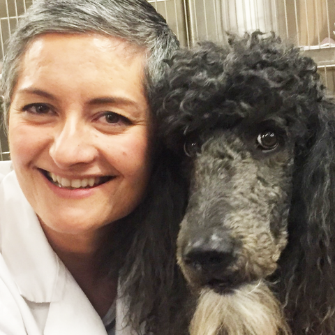 Veterinary dermatologist approved