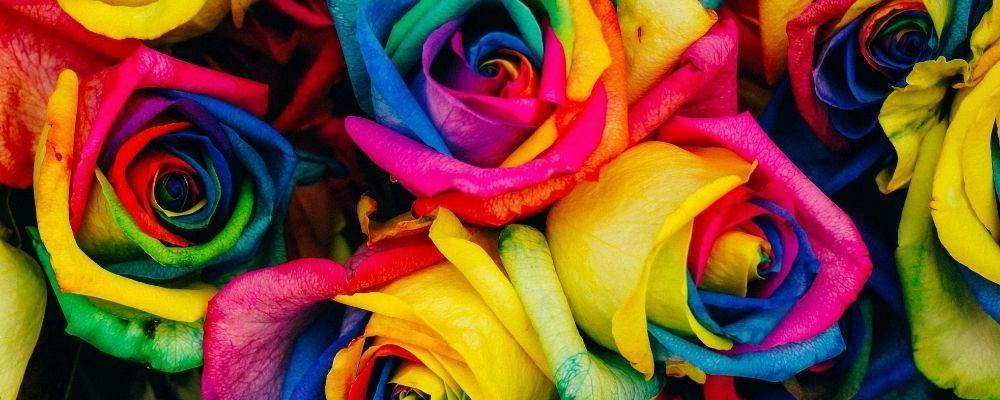 The Mystery Behind Rainbow Roses