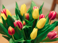 Tulips | Brampton, ON Florist