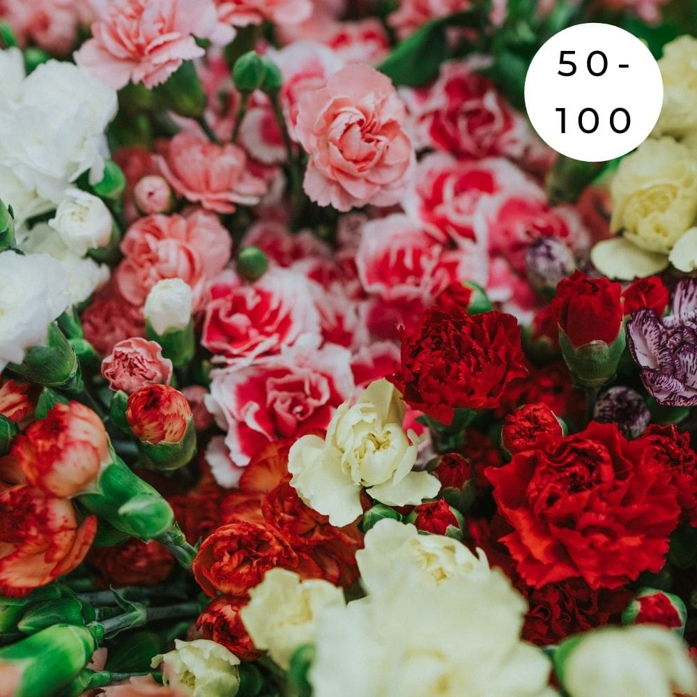50 - 100 Assorted Carnations - Shalimar Flower Shop