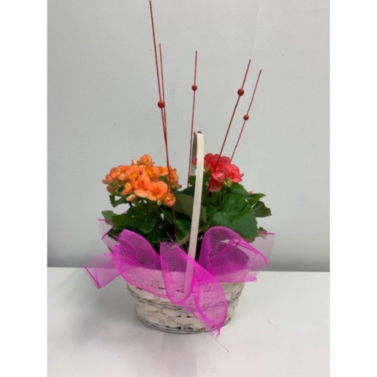 Contemporary Flowering Basket - Shalimar Flower Shop