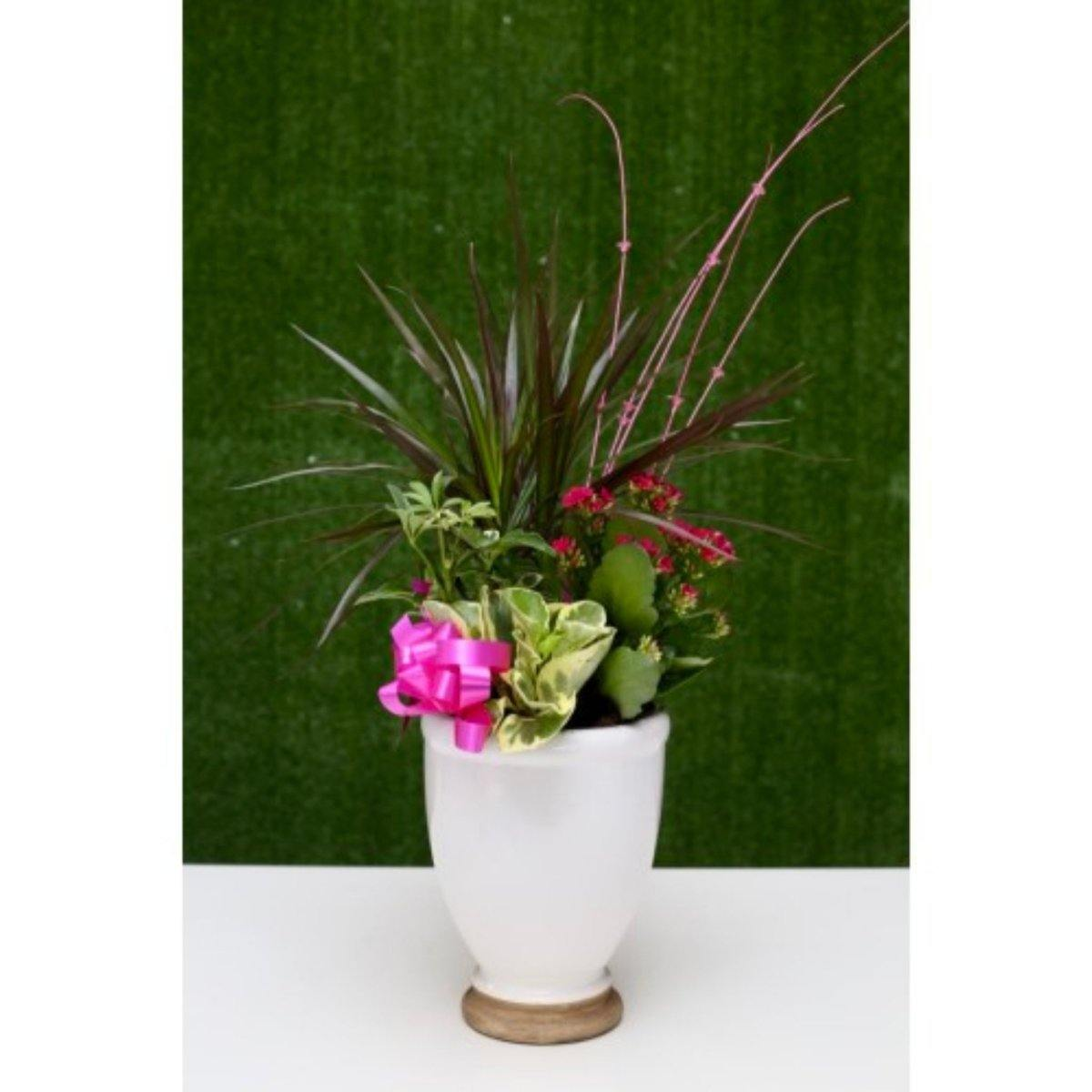Delightful Tower Dish Garden - Shalimar Flower Shop