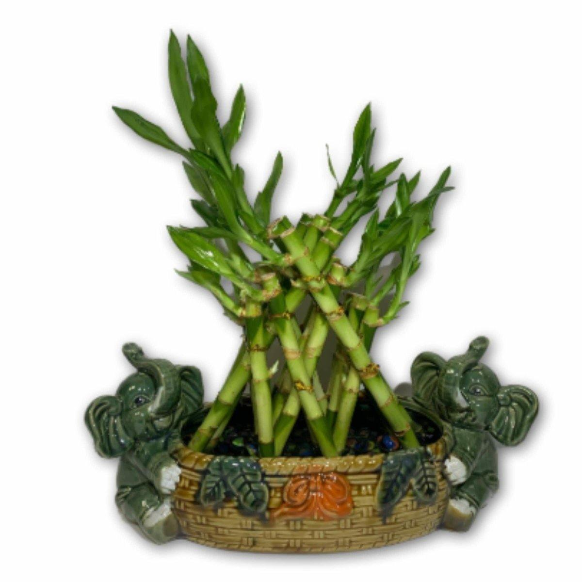 Double Trouble Bamboo in Elephant Vase - Shalimar Flower Shop