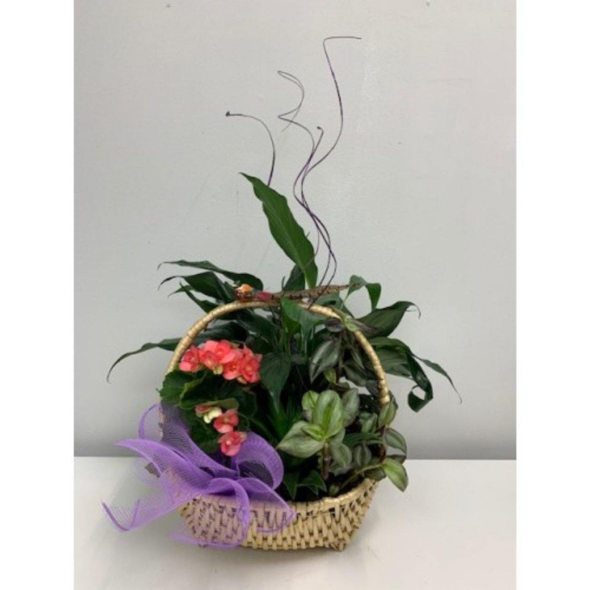 Everyday Special Planter Basket - Shalimar Flower Shop