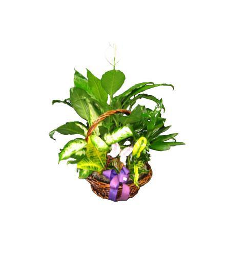 Gorgeous Green Planter Basket - Shalimar Flower Shop
