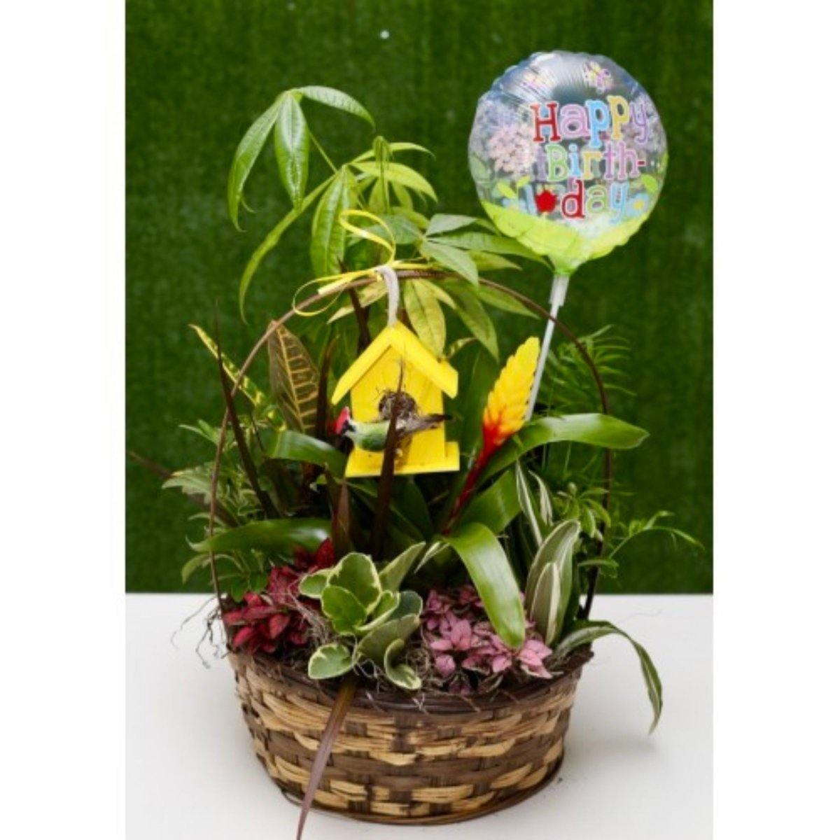 Large Lush Green Dish Garden - Shalimar Flower Shop