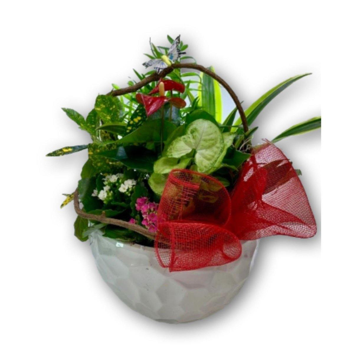 Planter with Red Bow in Ceramic Pot - Shalimar Flower Shop