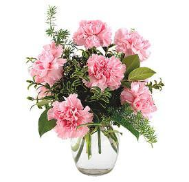Pretty in Pink Carnations - Shalimar Flower Shop
