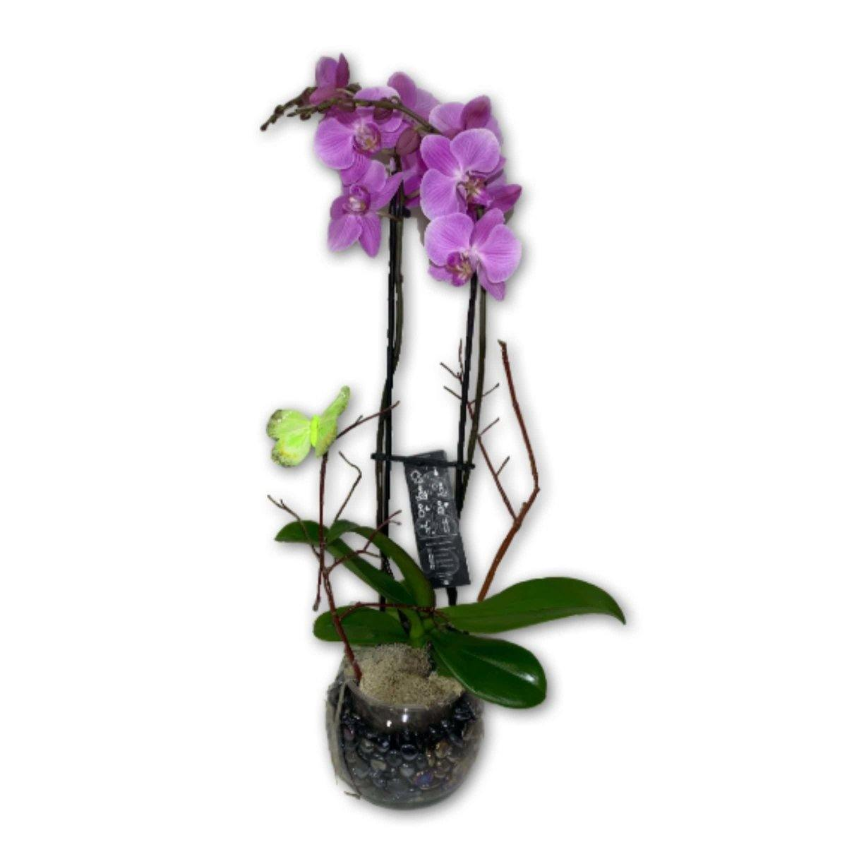 Pretty Purple Orchid - Shalimar Flower Shop