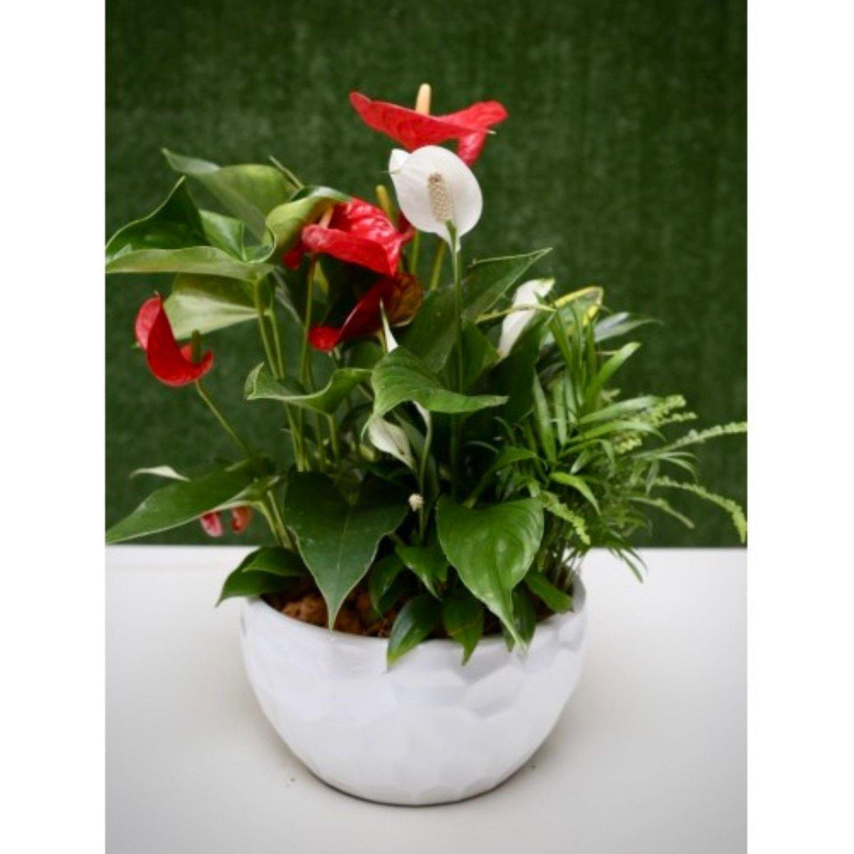 Red & White Elegance in Ceramic Pot - Shalimar Flower Shop