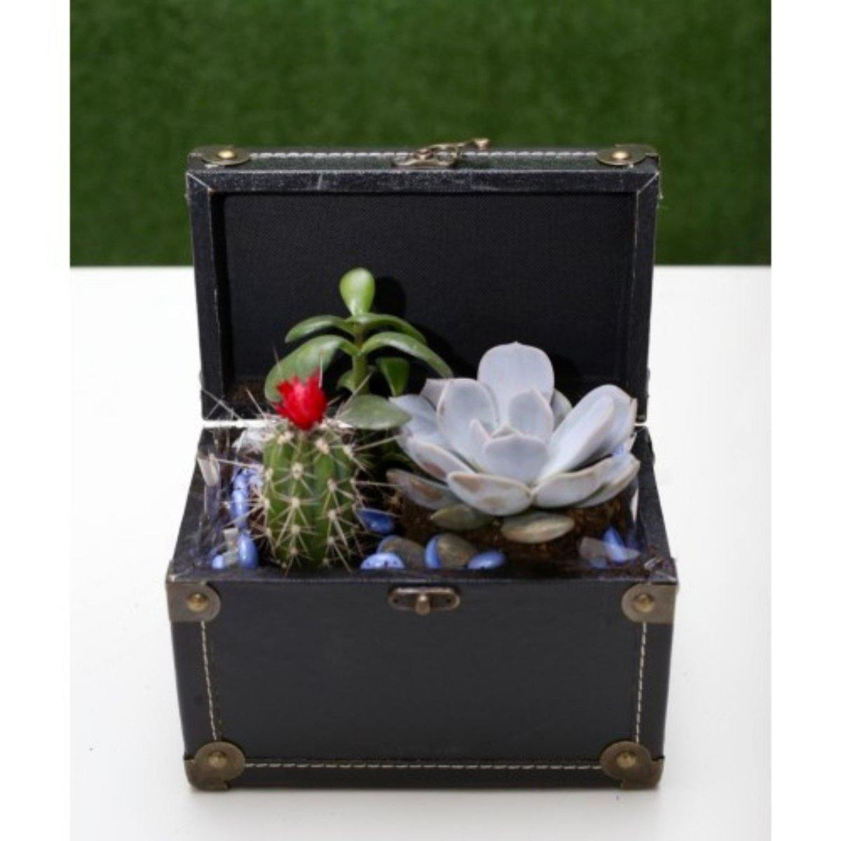 Succulent Dish Garden in a Box - Shalimar Flower Shop
