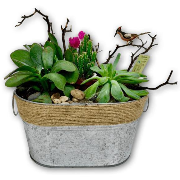 Succulent Garden in Tin Container - Shalimar Flower Shop