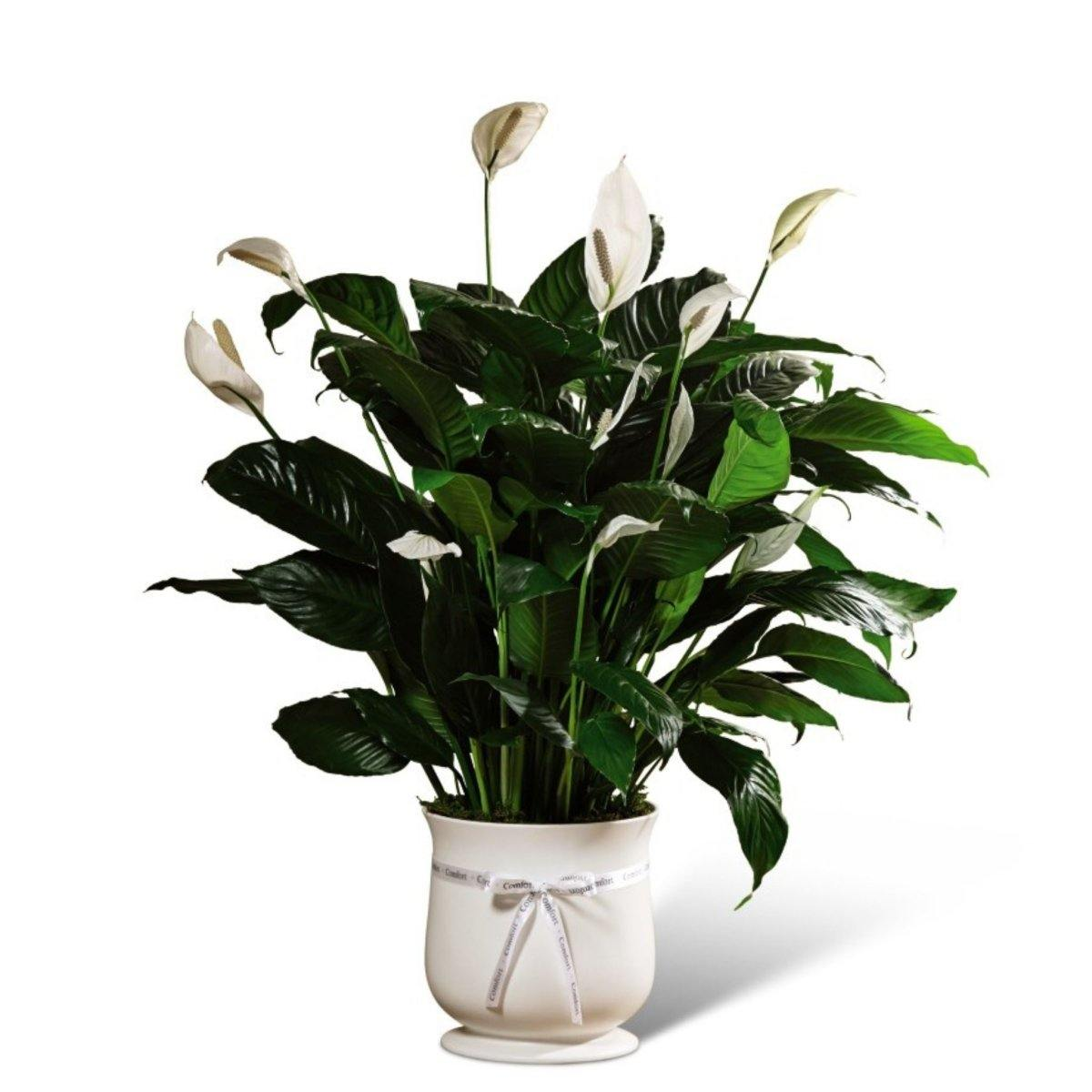 The FTD® Comfort Planter - Shalimar Flower Shop