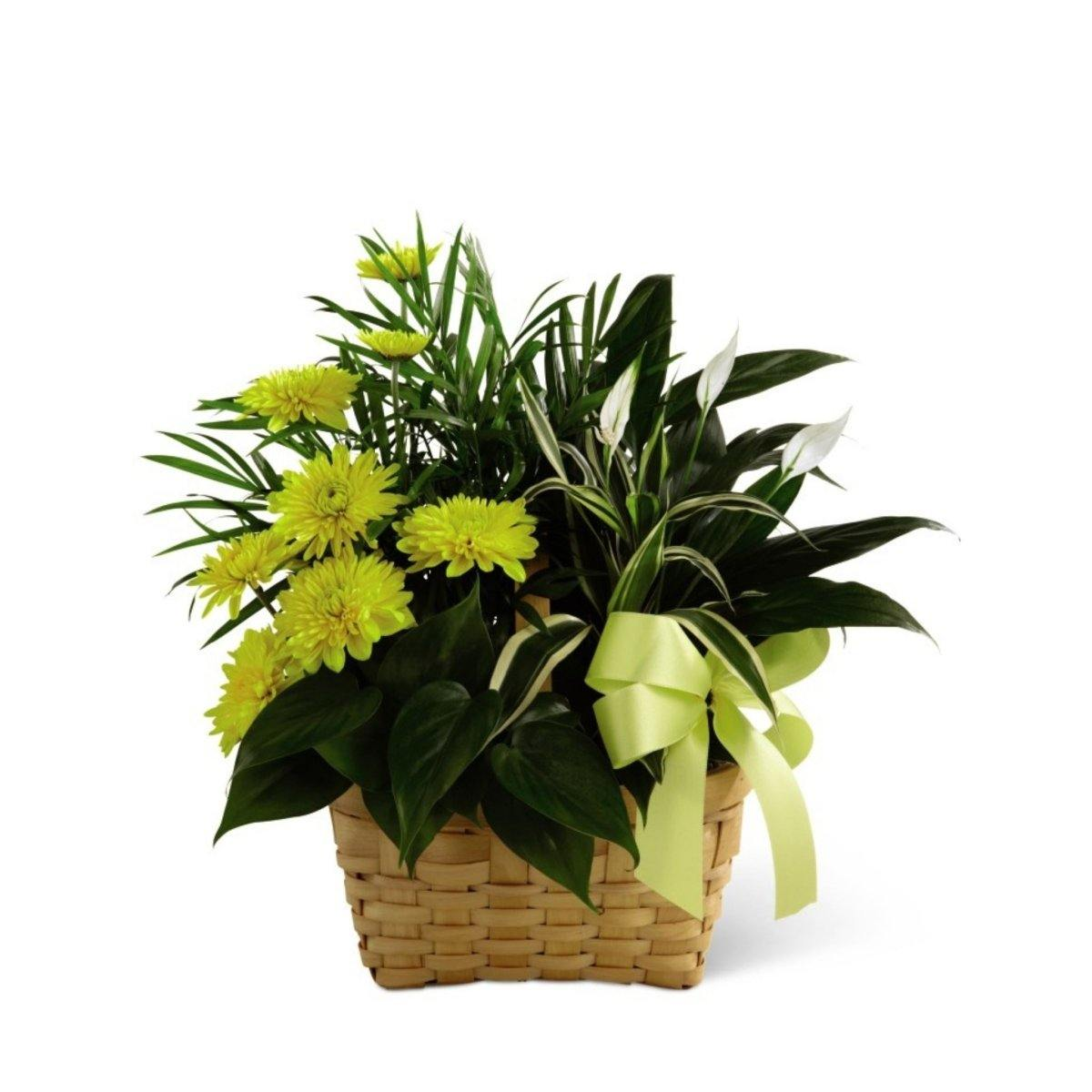The FTD® Loving Light Dishgarden - Shalimar Flower Shop