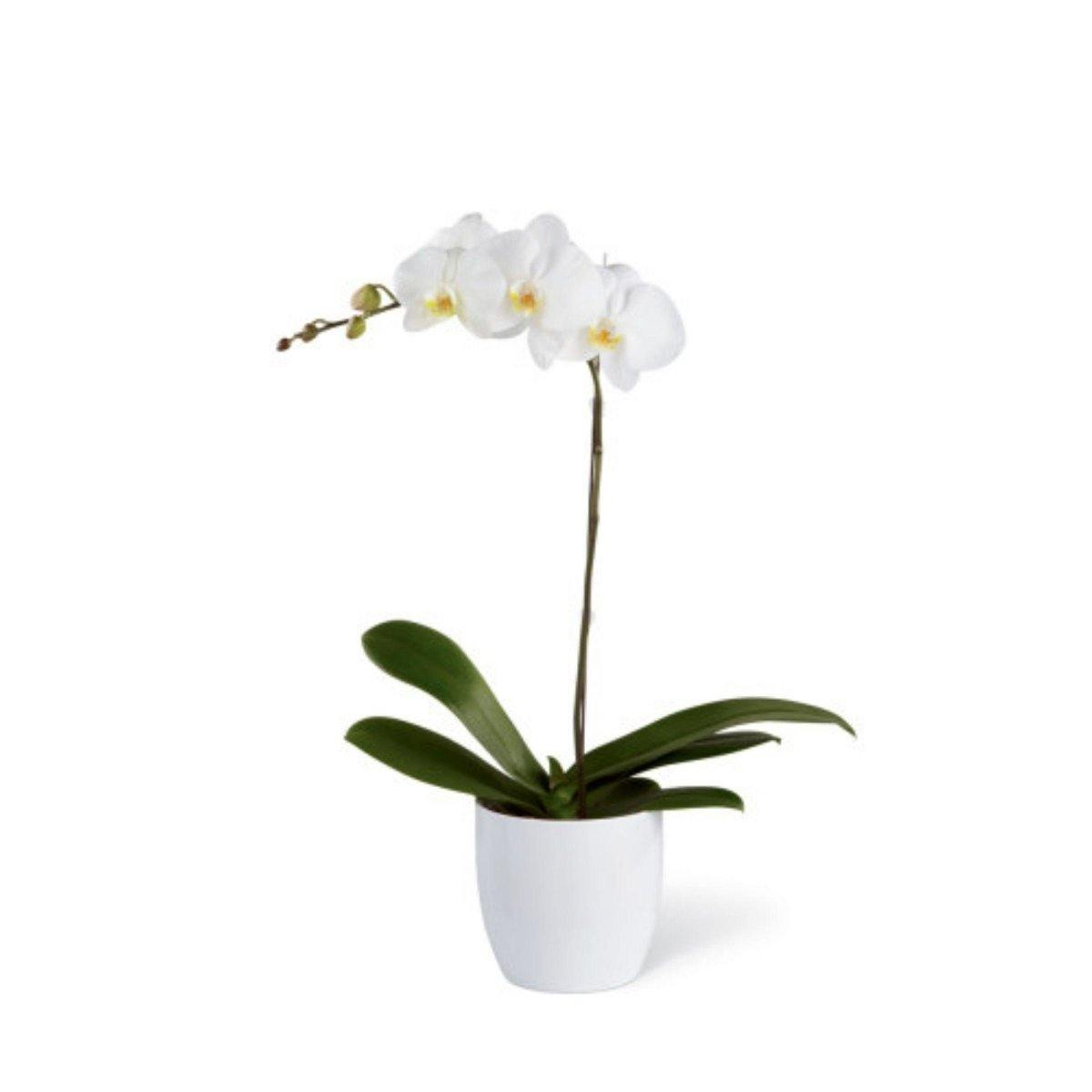 The FTD® White Orchid Ceramic Planter