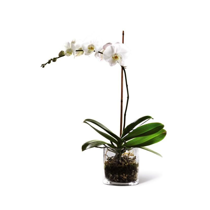 The FTD® White Orchid Planter - Shalimar Flower Shop