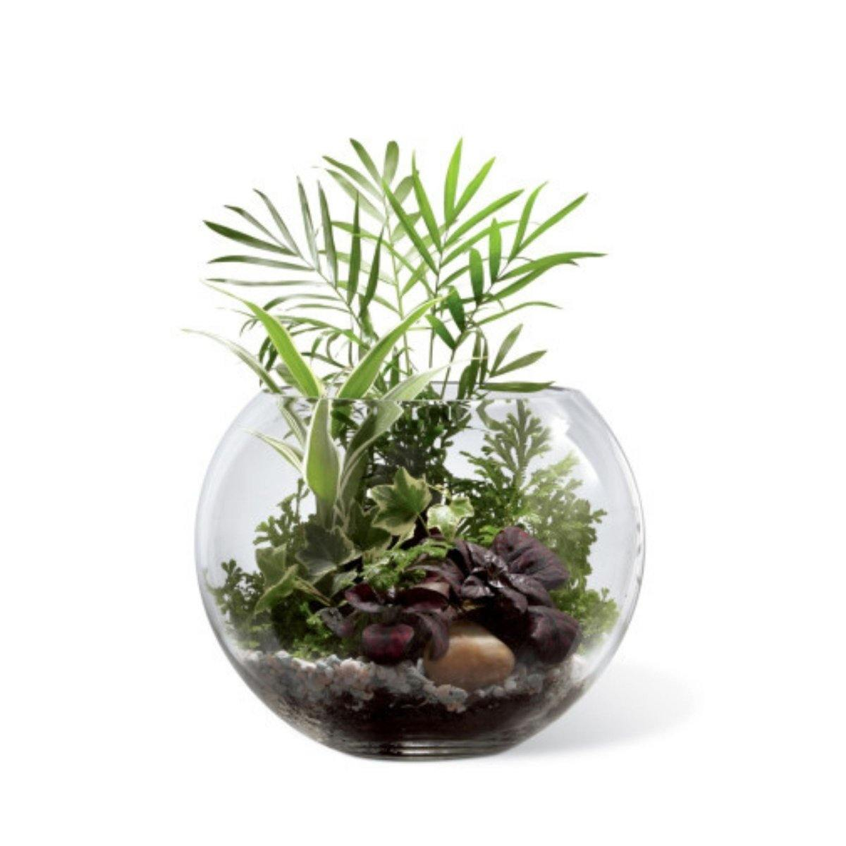 The FTD® Woodland Greens Terrarium - Shalimar Flower Shop