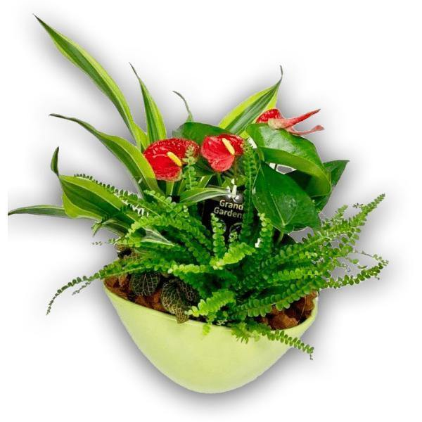 Wispy Wonder Garden Plant in Ceramic Pot - Shalimar Flower Shop