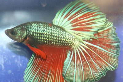 Guide To Caring For Tropical Fish