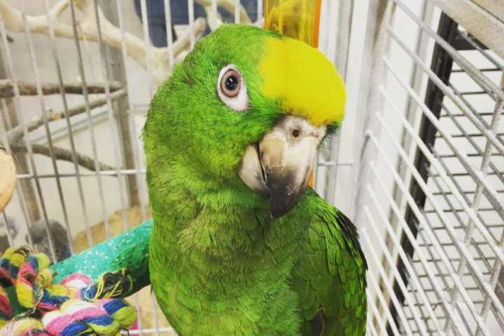 Guide To Caring For Parrots