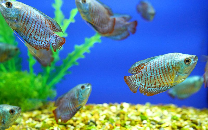 Common Fish Diseases, Fungus & Bacteria