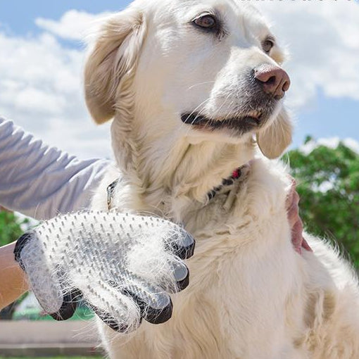 Glove for Brushing and Massaging Pets from InnovaGoods