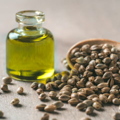 Hemp Seed Oil Key Ingredient Image