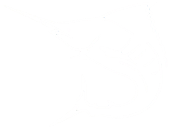 Marlin Skeleton Vinyl Decals