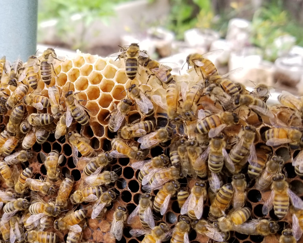 Many reasons to keep honeybees