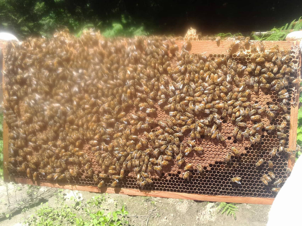 Load image into Gallery viewer, Honeybees - Nuc 2021 - 4 Frame Deep Langstroth