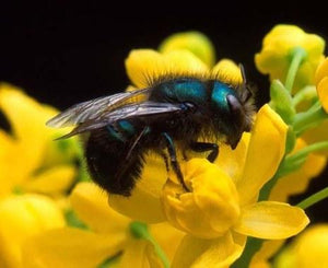 Load image into Gallery viewer, Workshop: Mason Bees and Native Pollinators