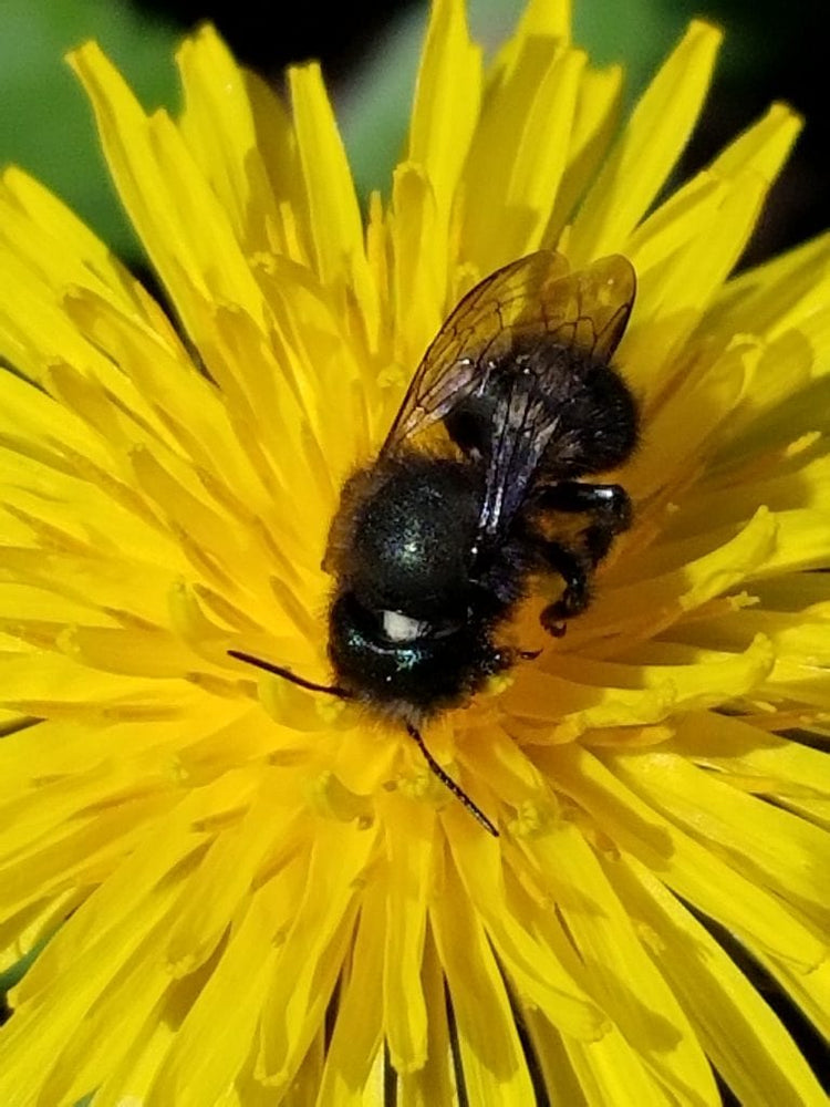 Load image into Gallery viewer, Mason Bee Rental Program