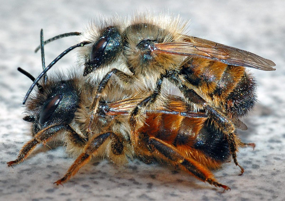 Mason Bee Rental Program
