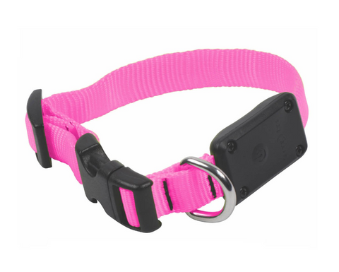Nite Ize Nite Dawg LED Dog Collar - XS - Neon Pink