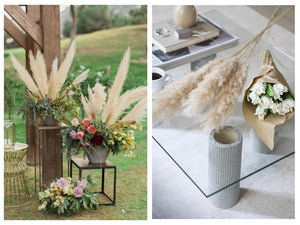 4 Colors Pampas Grass Seeds Patio and Garden Potted Pampas Grass Seeds  200Pcs
